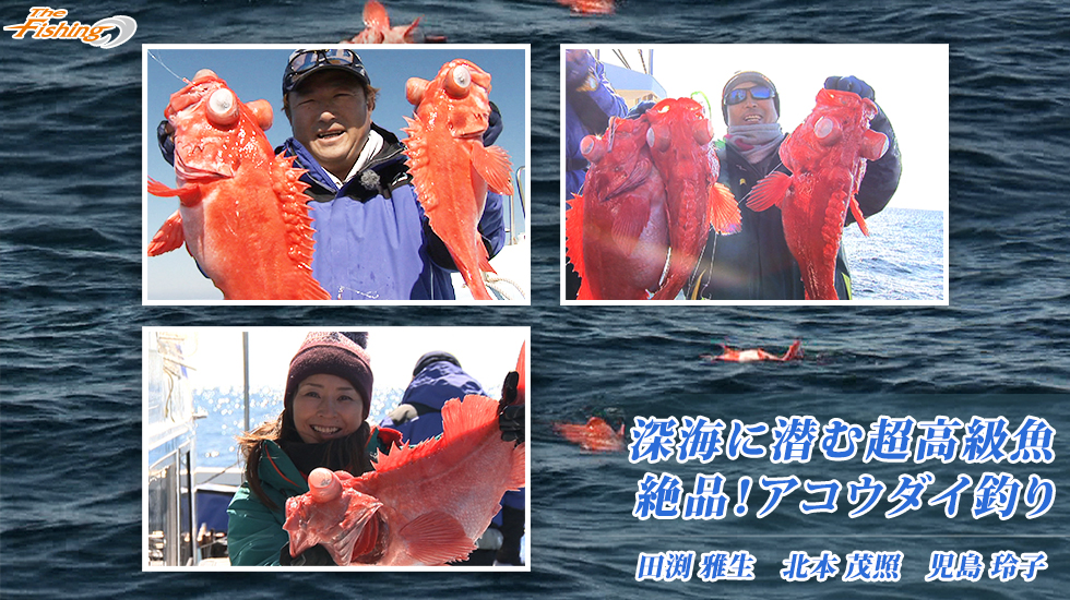 深海に潜む超高級魚 絶品!アコウダイ釣り